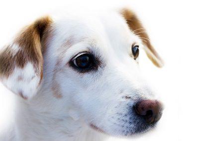 dog_pet_gift